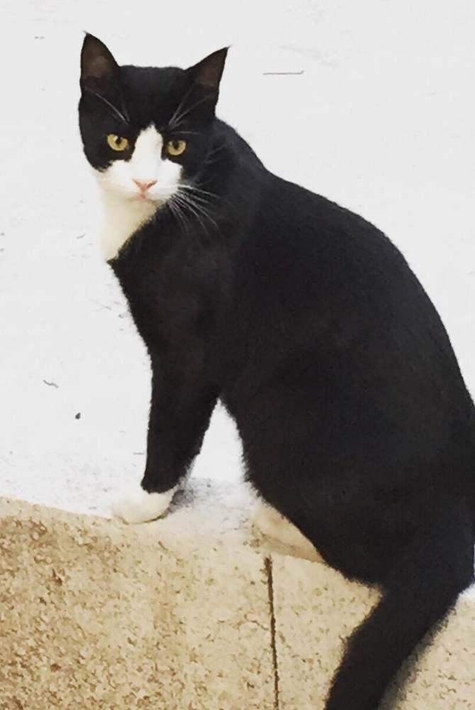 Fekete macska szex játék