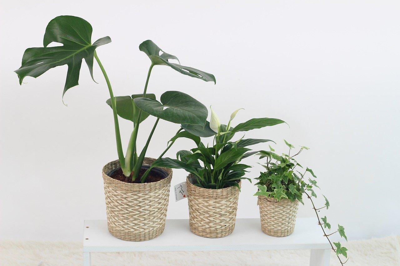 Növény 01