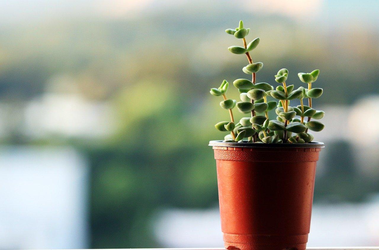 Növény 02