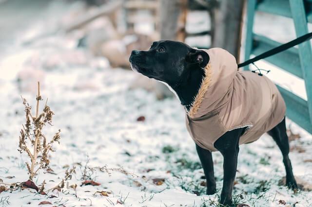 Kutyájával együtt akarták agyonlőni a magyar férfit