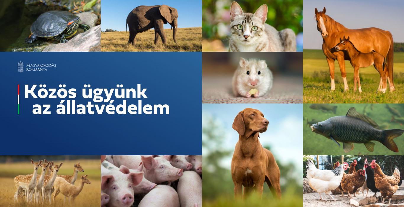 Állatvédelmi konzultáció