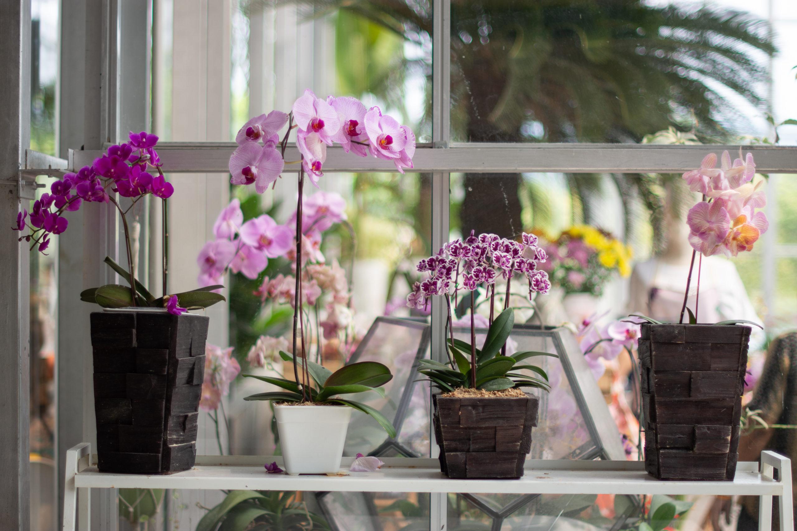Nem virágzik az orchideád? Ki ne dobd, ez a trükk segít!