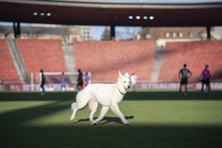 Chilla nagyobb sikert aratott, mint a focisták