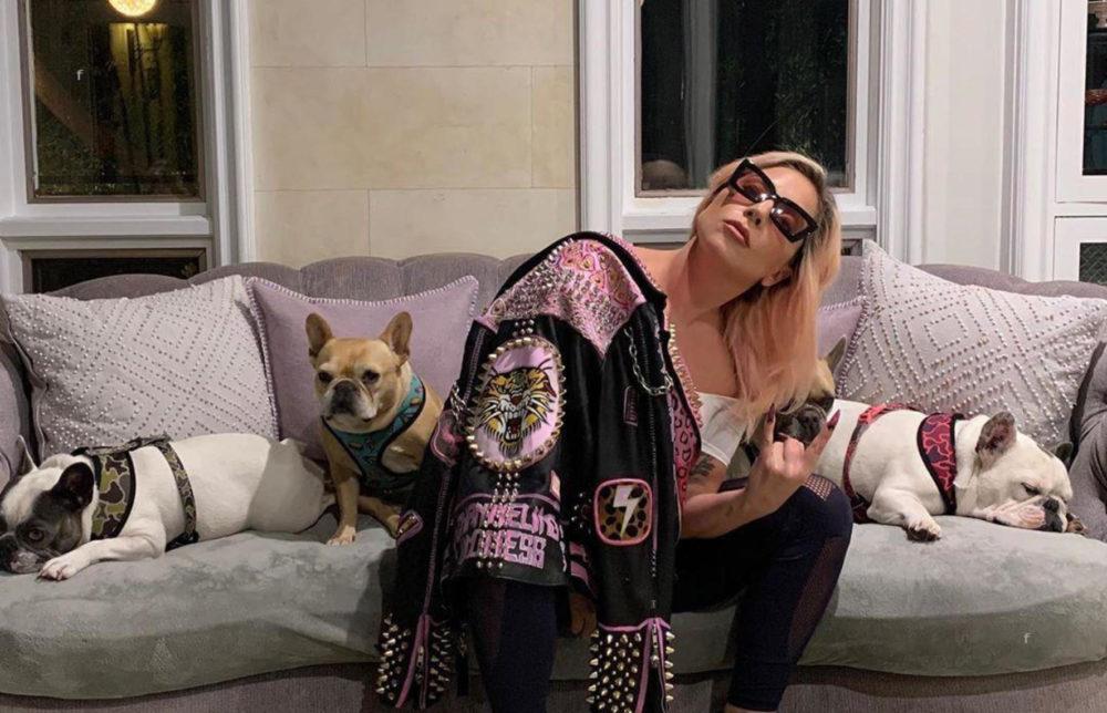 Elrabolták Lady Gaga kutyáit