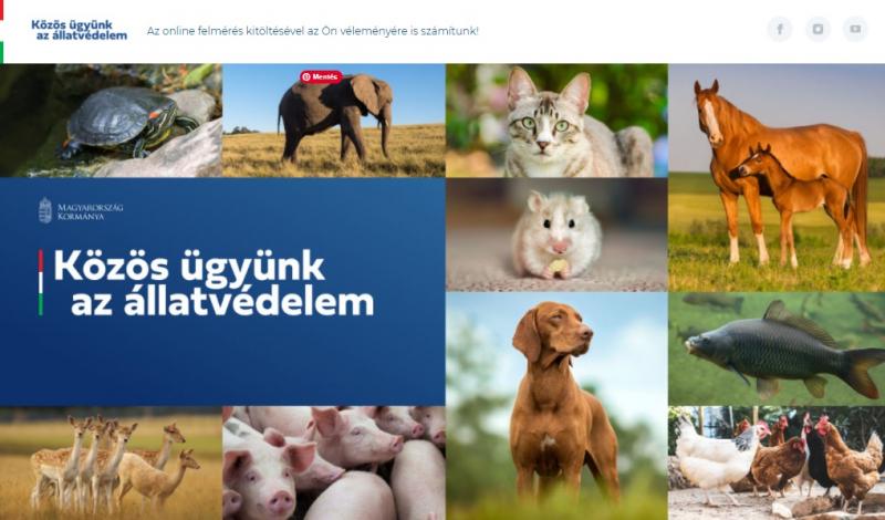 Kiadták az állatvédelmi konzultáció eredményeit