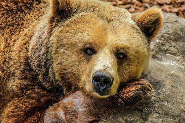 A medve egy jaccuziban pihente ki a fáradalmakat
