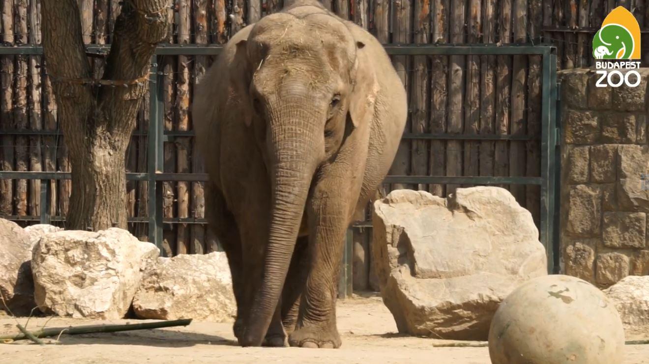 Elefántbébi érkezik