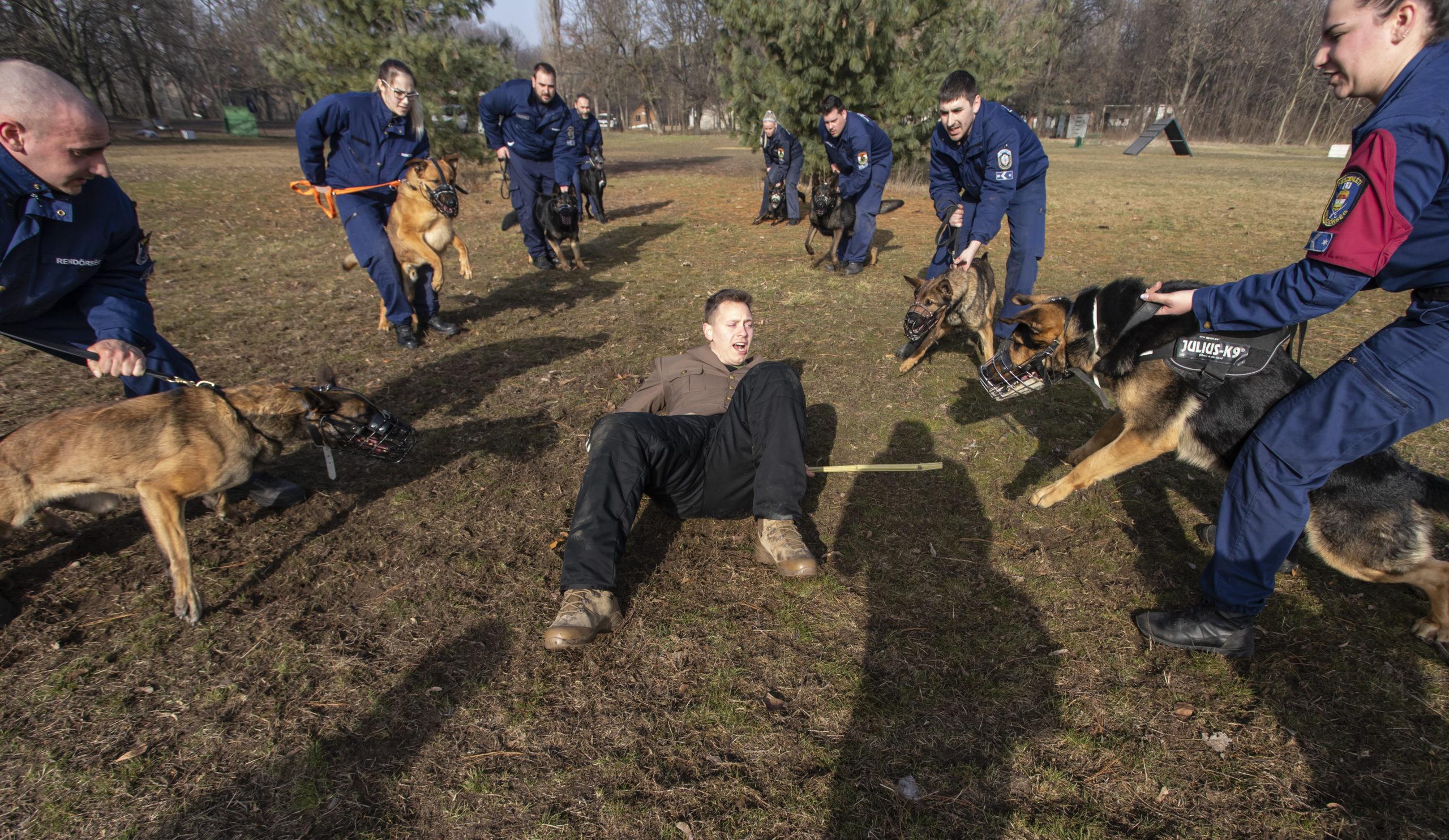 Brutális kiképzést kapnak a magyar kutyák