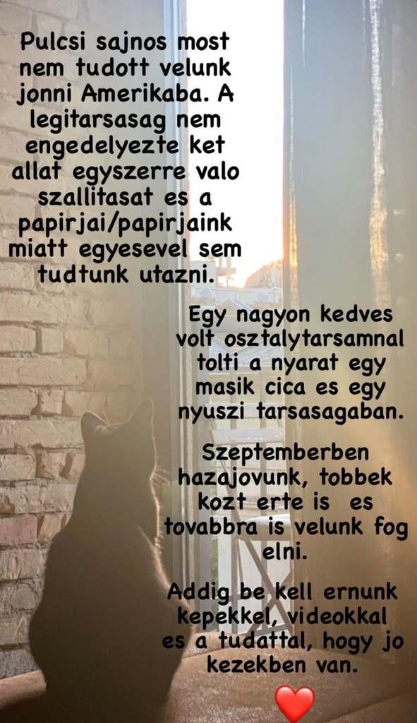 Pulcsi Magyarországon maradt