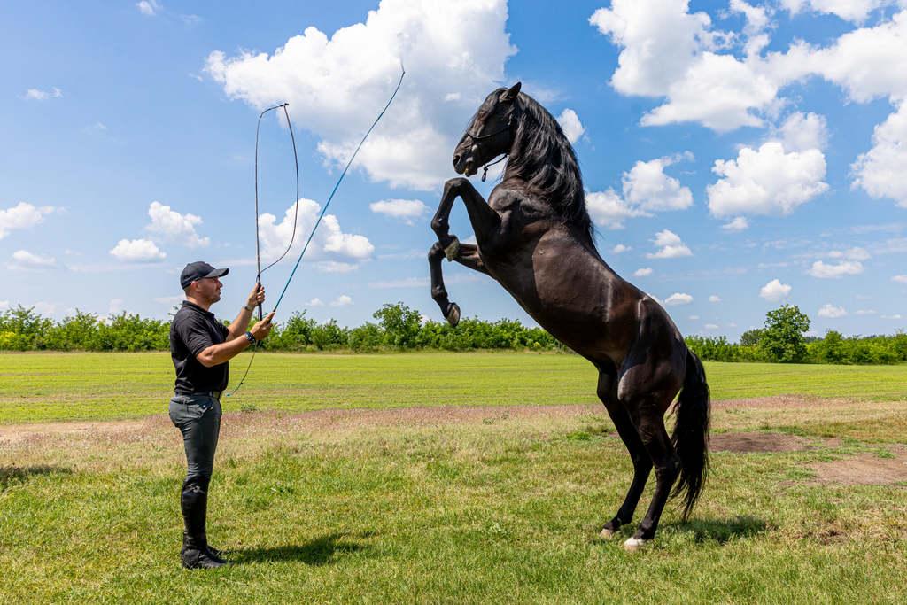 Magyar lovakon vágtáznak a legnagyobb filmsztárok, exkluzív riport