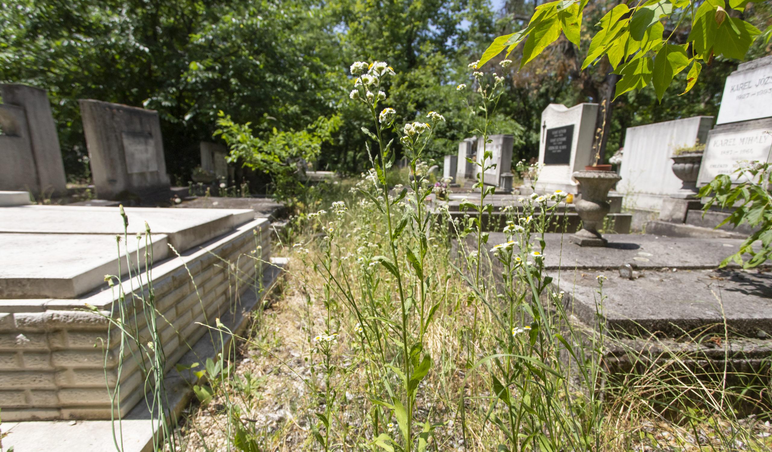 magyar temető
