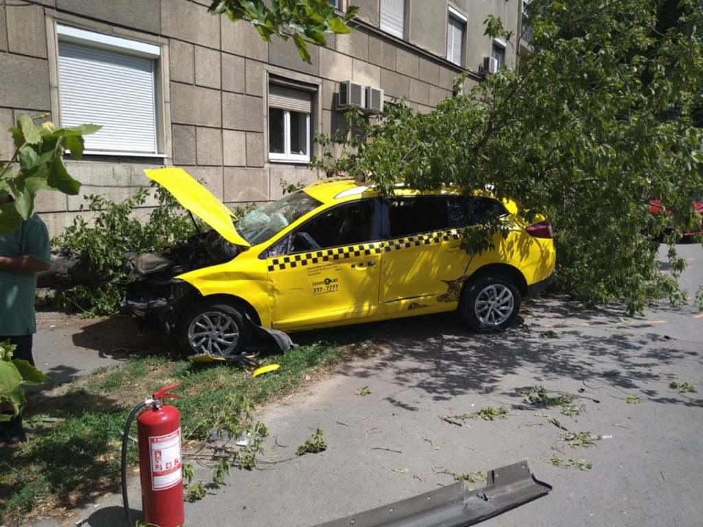 Az ámokfutó egy fának lökte a másik kocsit, az ütközés akkora volt, hogy a fa kidőlt